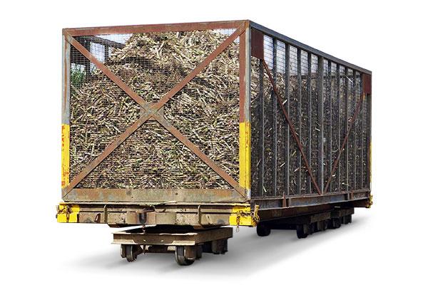 Sugar Cane Wagons